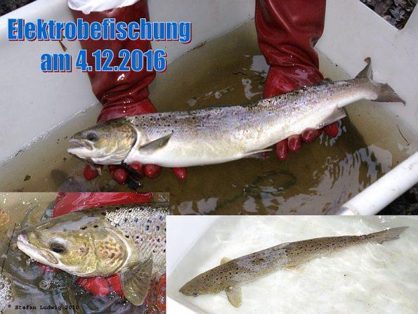 e_befischung_2016_k